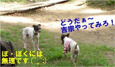 Yoshi251