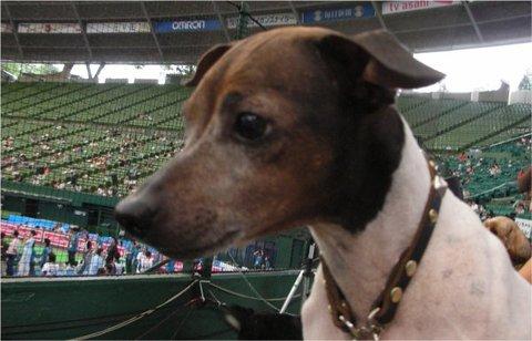 Superdog11