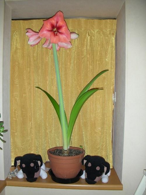 2009_02_01_3