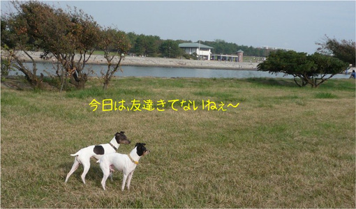20111113_022